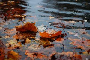 Raindrops falling onto fallen leaves